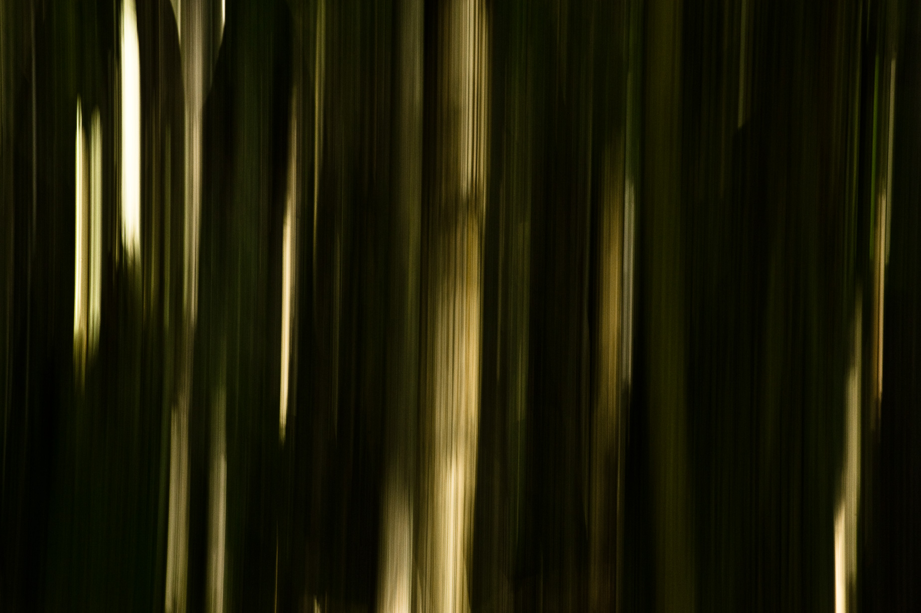 An image of part of the installation Forest by Jeffrey Scott French